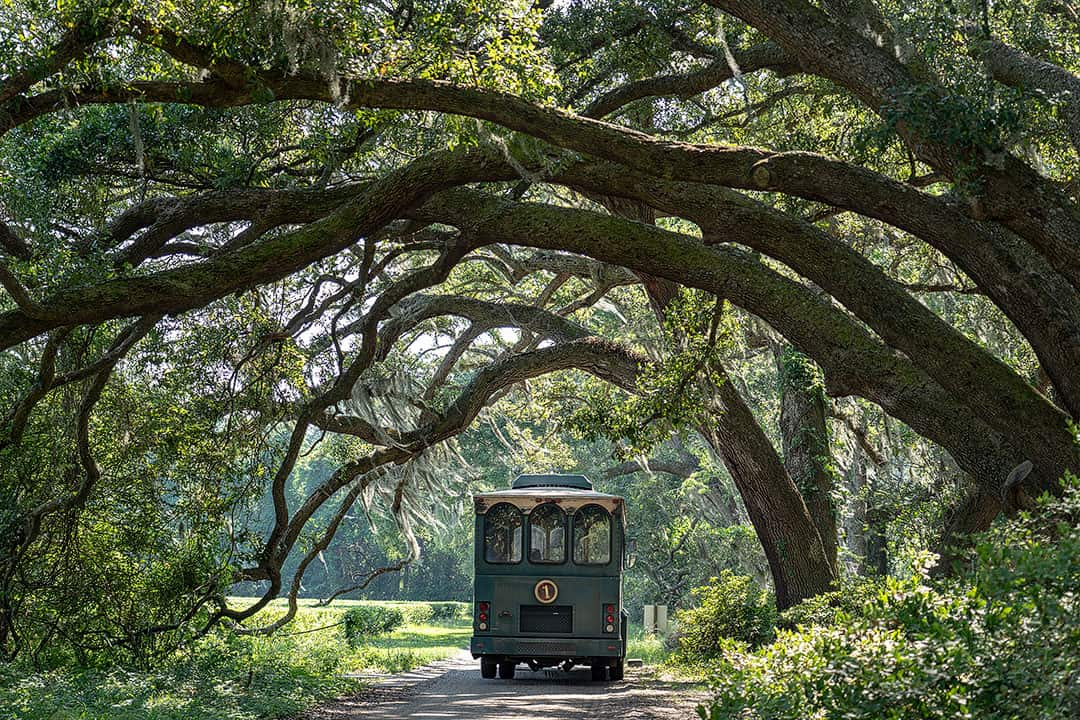 Charleston Tea Plantation + 25 Amazing Free Things to Do in Charleston SC