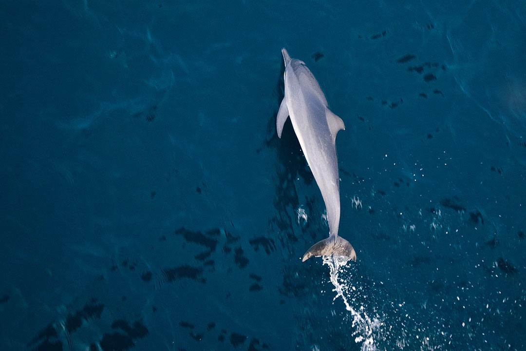 Dolphin Tours Destin