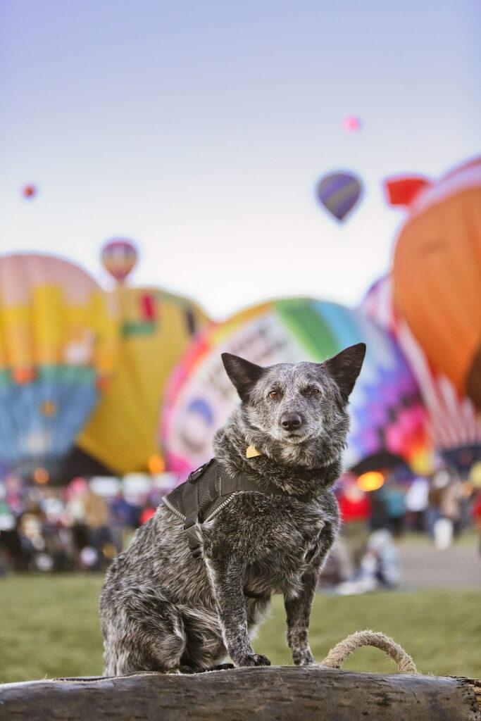 Albuquerque New Mexico Balloon Festival 2020
