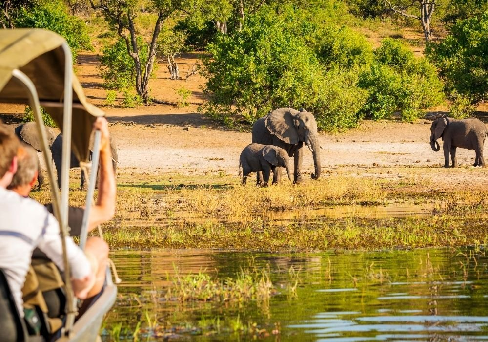 places to visit in january for safari