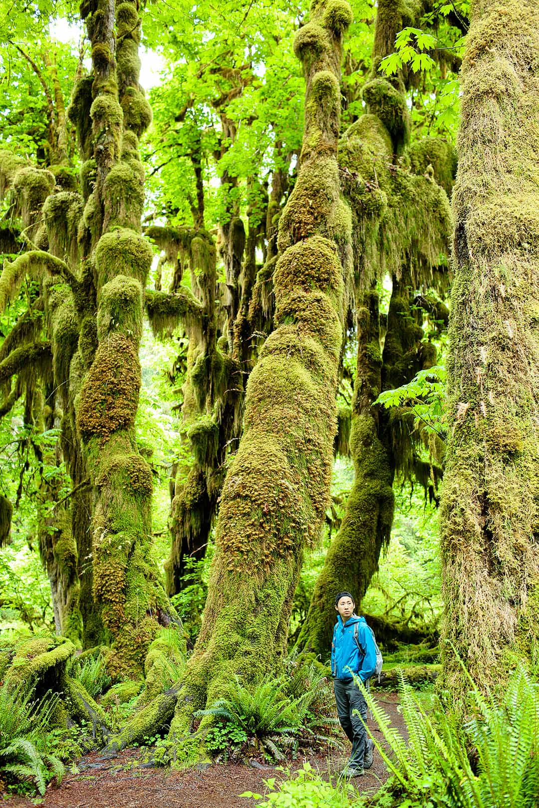 Hall of Mosses Trail in Olympic National Park