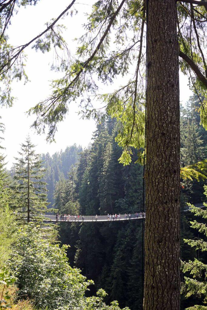 Capilano Suspension Bridge Vancouver BC
