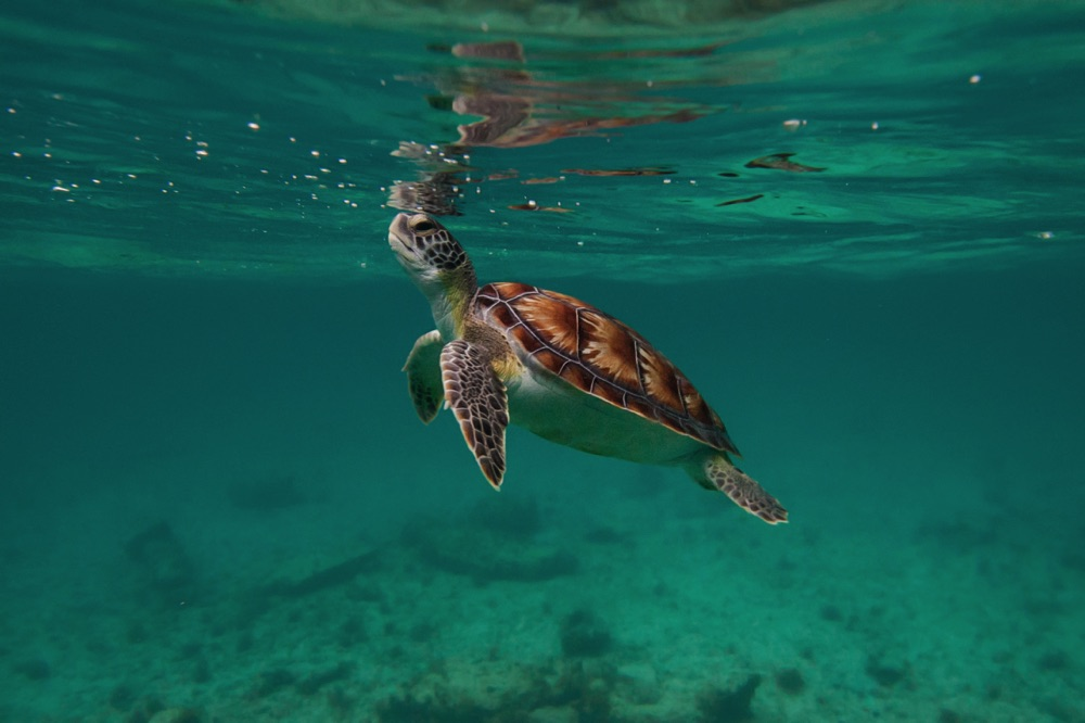 what to do in cancun go snorkelling to see turtles