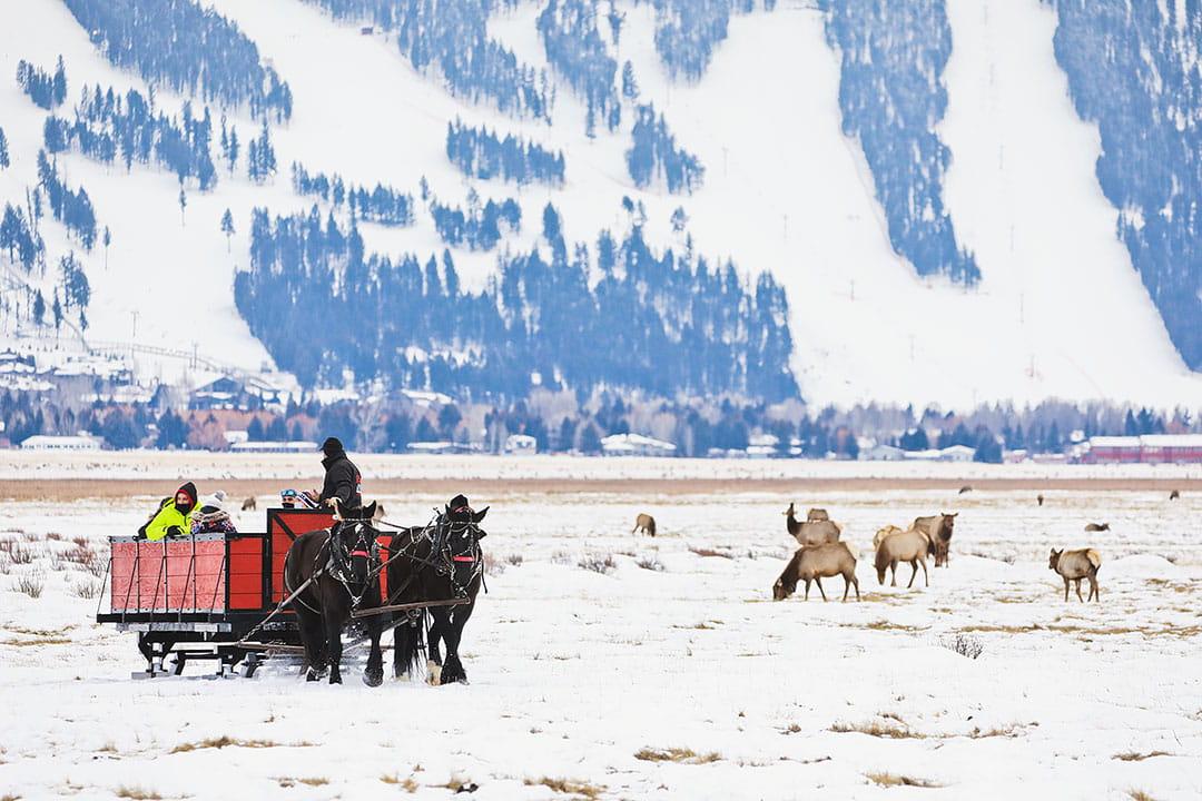 sleigh rides jackson hole