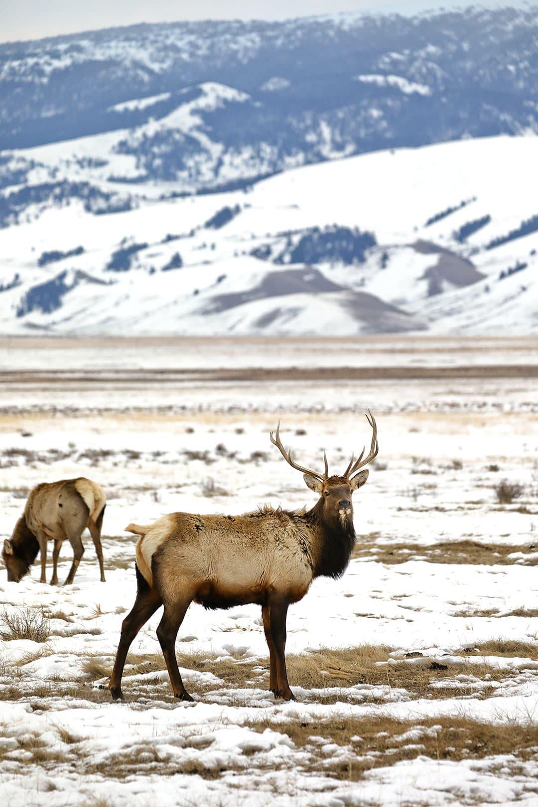 national elk refuge sleigh rides