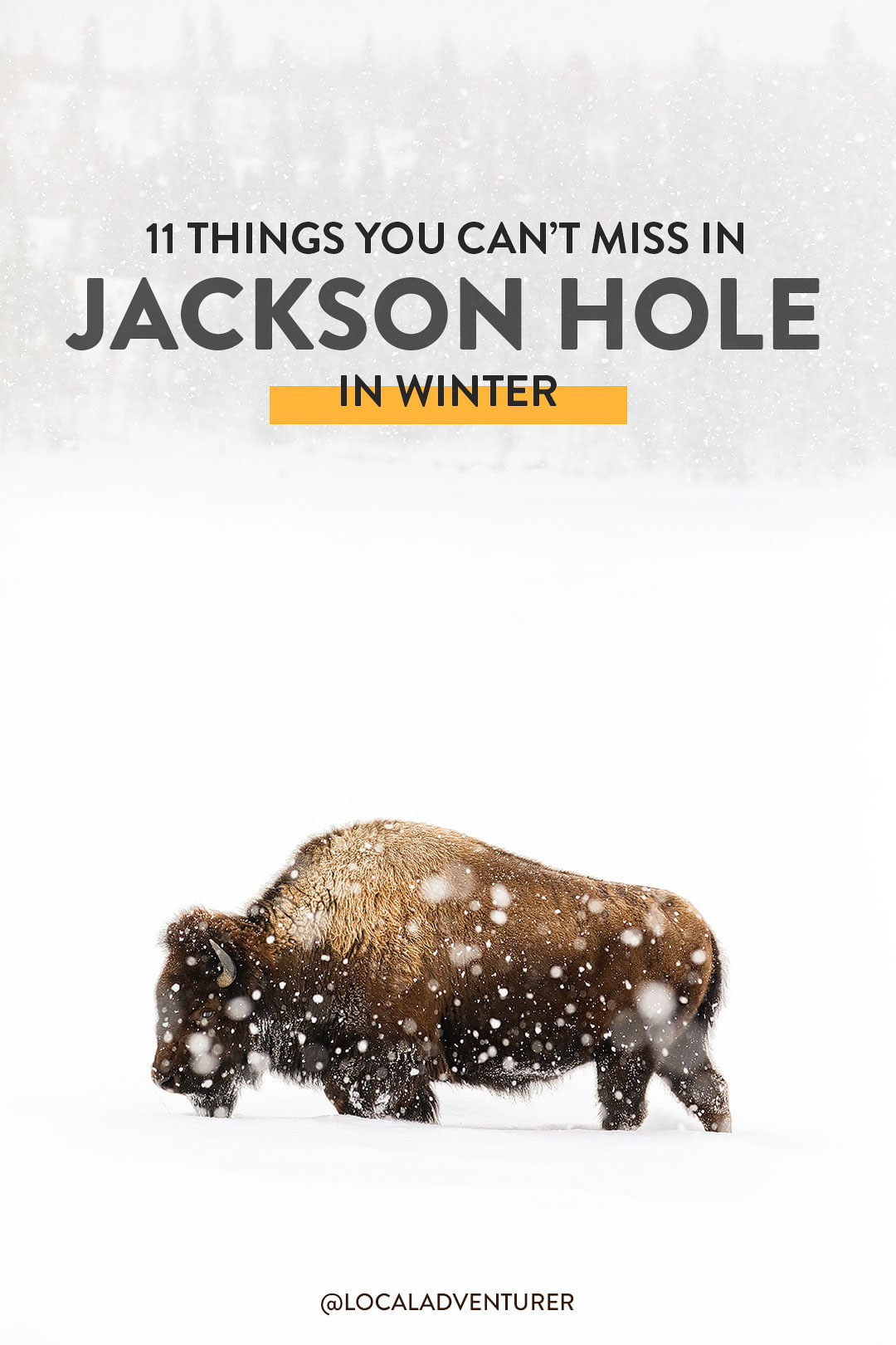 11+ Unforgettable Things to Do in Jackson Hole in Winter