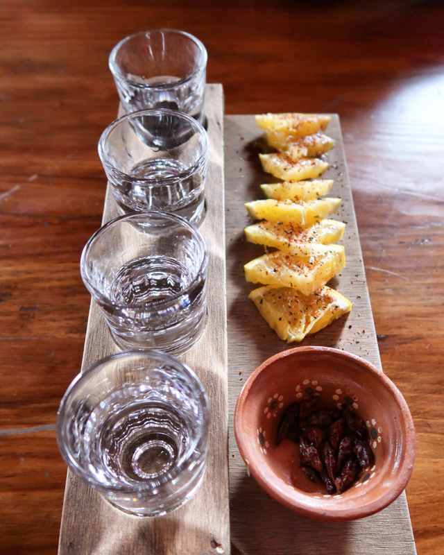 things to do in mexico go on a tequila tour