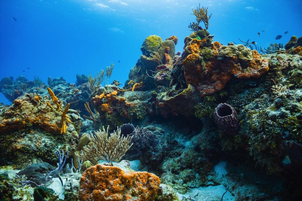 scuba diving cozumel mexico