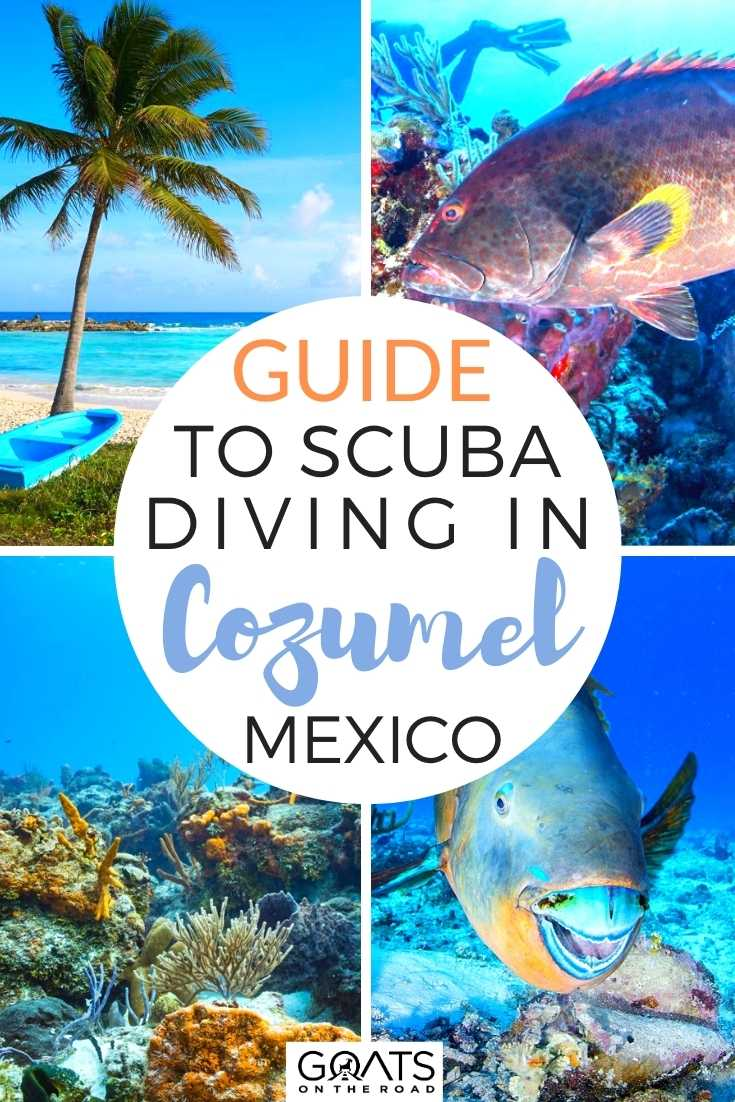 Guide To Scuba Diving in Cozumel, Mexico