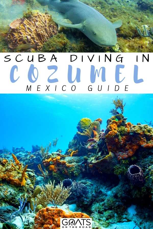 """Scuba Diving in Cozumel, Mexico"