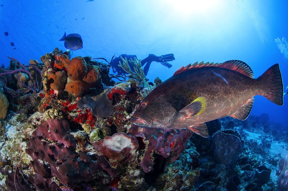 scuba divers cozumel