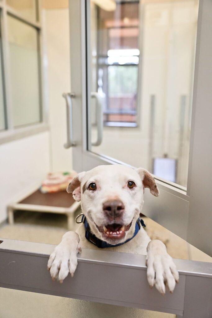 best friends dog rescue kanab utah