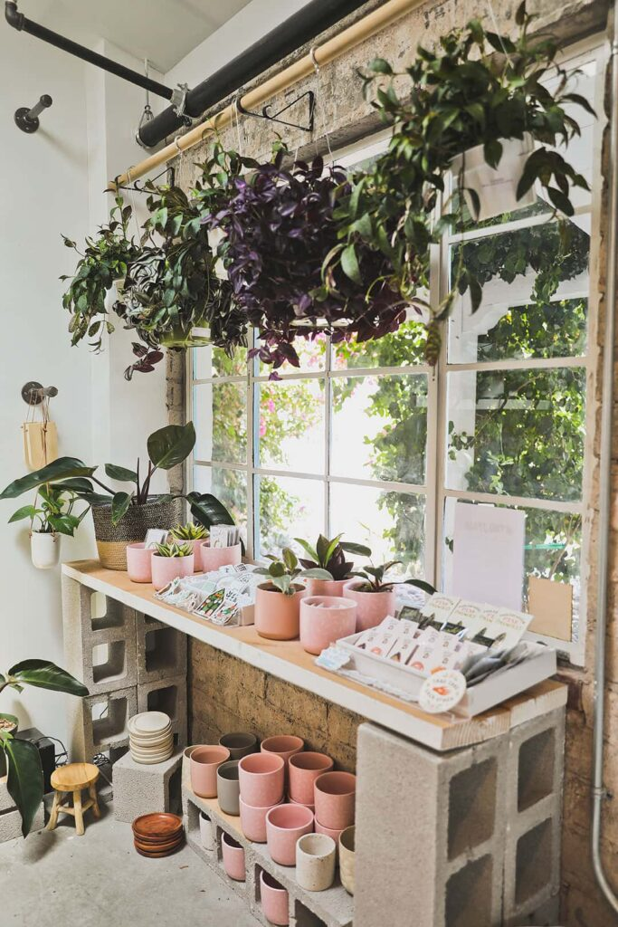 lv plant collective fergusons downtown