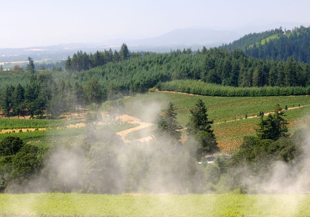things to do in portland oregon visit the wineries