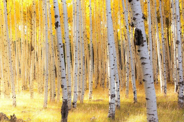 Flagstaff Fall Colors