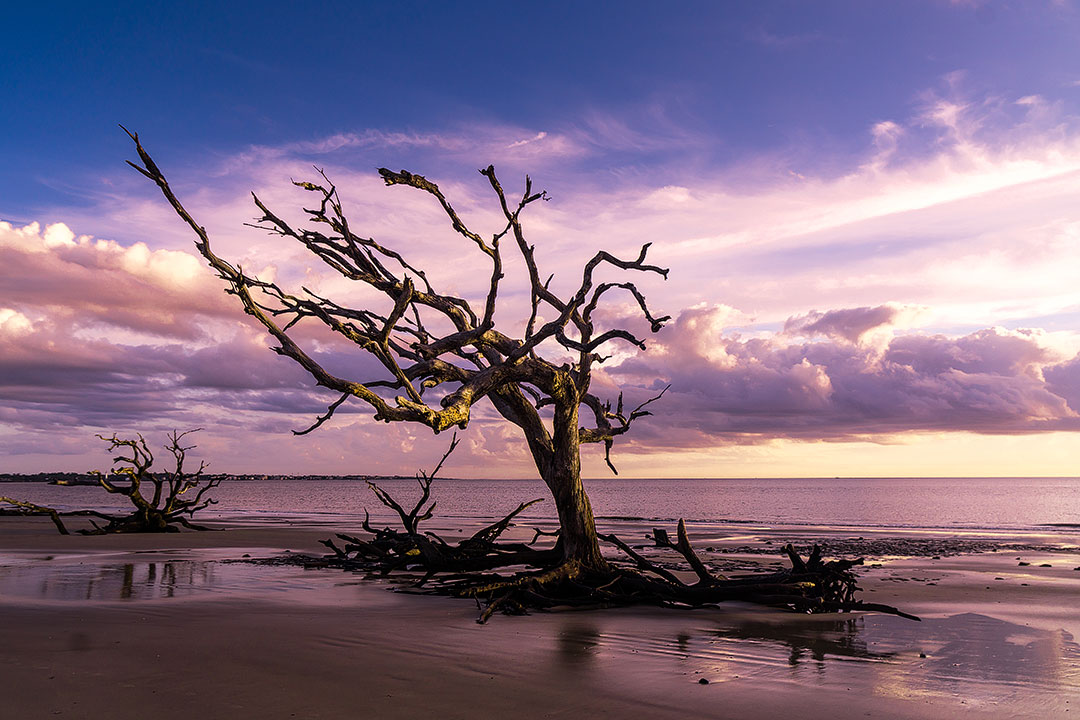 Driftwood Beach Jekyll Island + 15 Best Weekend Trips from Atlanta GA