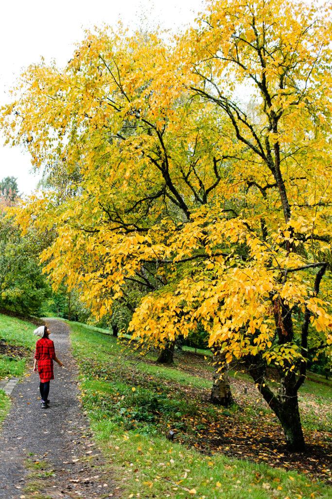 Portland Oregon Fall Colors + 17 Places to See the Best Fall Foliage in USA // Local Adventurer #fallfoliage #fall #autumn #leaves #trees #usa #travel #pdx #portland #oregon